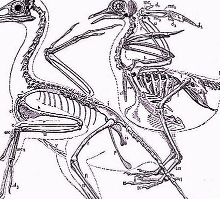 Sitna drevna ptica otkrivena u Kini dijeli značajke lubanje s Tyrannosaurus rexom